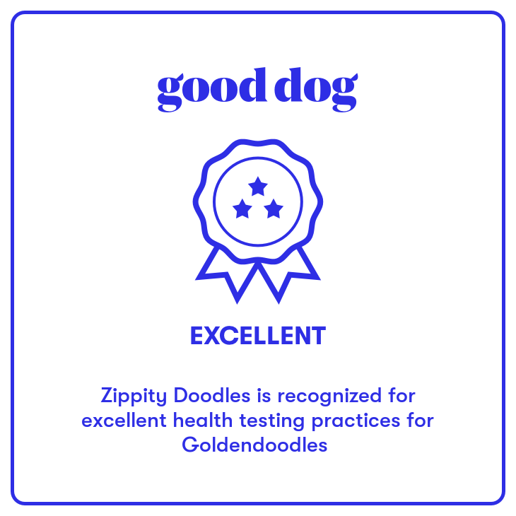Zippity Doodles Breeders Of Quality Goldendoodle Puppies In